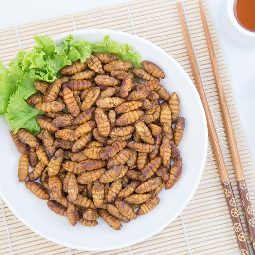 Why Eat Edible Insects?