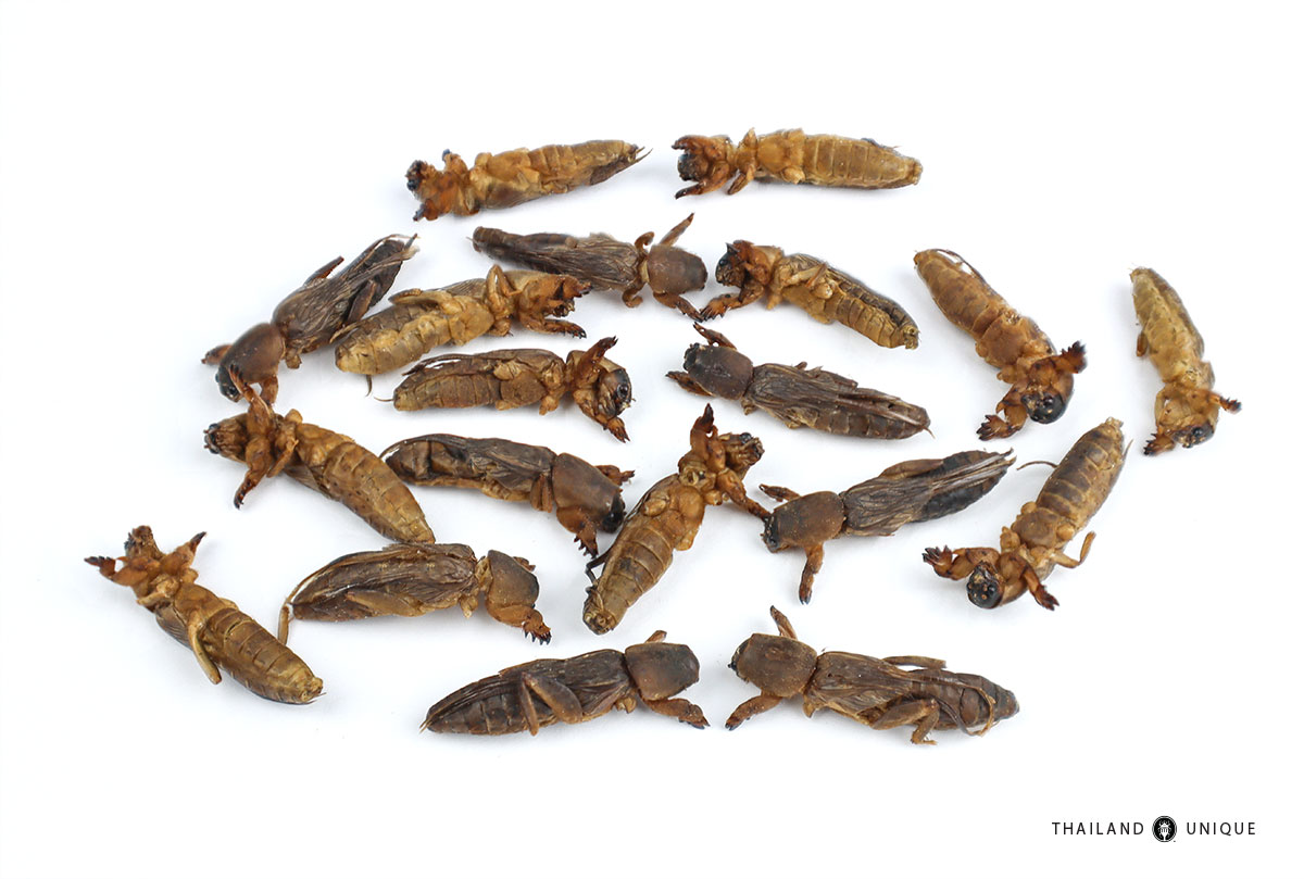 edible mole crickets